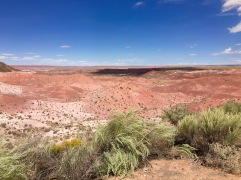 Petrified Forest National Park, Tiponi Point © Brittany Webb