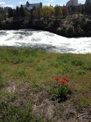 Spokane in Bloom © Brittany Webb